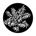 Foliage Ferns